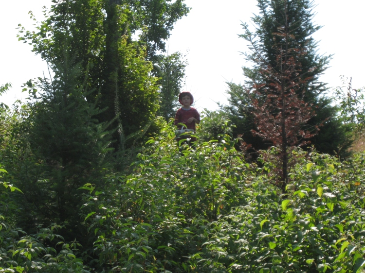 boy in forest, mouth full of raspberries