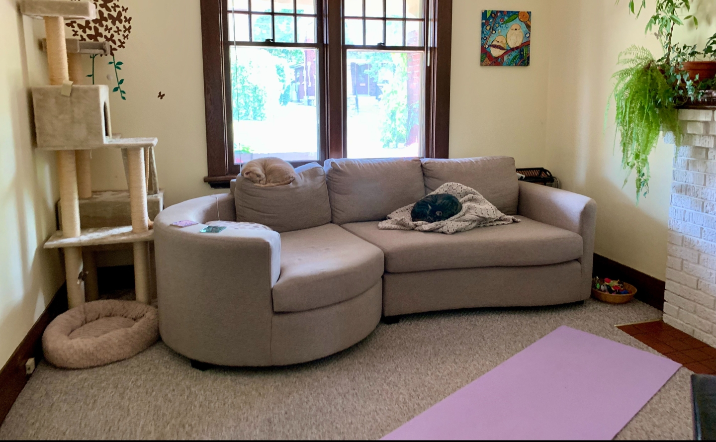 living room with yoga mat and sleeping cats