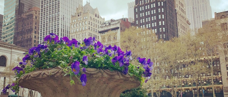 purple flowers and skyscrapers around green space
